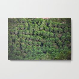 Young pine forest 6809 Metal Print