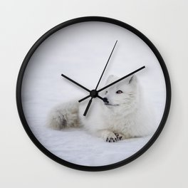 Arctic Fox Wall Clock