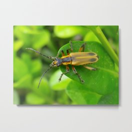 beetle bug Metal Print