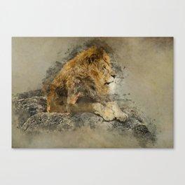 Lion on the rocks Canvas Print