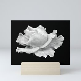 White Rose On Black Mini Art Print