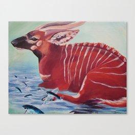 Tragelaphus eurycerus Canvas Print