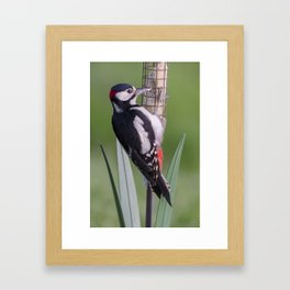 Great Spotted Woodpecker 1 Framed Art Print