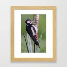 Great Spotted Woodpecker 1 Framed Art Print
