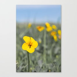 Flower of the Field Canvas Print