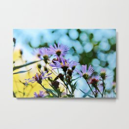 New York Aster in September Metal Print