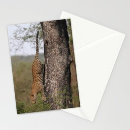 Cat by Owain McGuire Stationery Cards