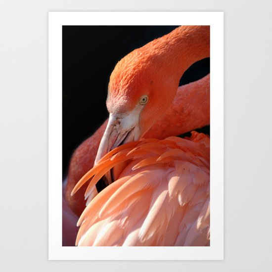 Cuban Flamingo Grooming Art Print