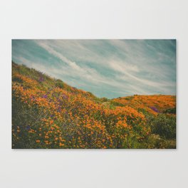California Poppies 018 Canvas Print