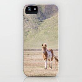 Icelandic Paint Horse Photograph iPhone Case