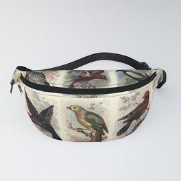 Shaft-tailed Bunting, Audubons Warbler, Pine Grosbeak, Piping Crow-shrike, Linnet, Saddle-back, Crested Malimbusa, Yellow-head, Amandava, Thrush25 Fanny Pack