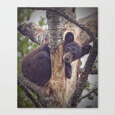 Photo of a Black Bear Cub in Northern Minnesota Canvas Print