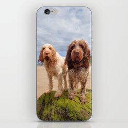 Italian Spinoni - Dogs on a Rock iPhone Skin
