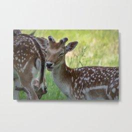 Winking deer Metal Print