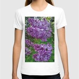 Lilacs in Bloom T-shirt