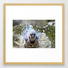Bird's Bath Framed Art Print