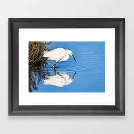 Snowy Egret Reflection at Bolsa Chica Ecological Reserve in Huntington Beach, California Framed Art Print