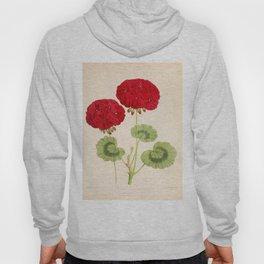 Double Zonal Pelargonium Vesta Vintage Flower Hoody