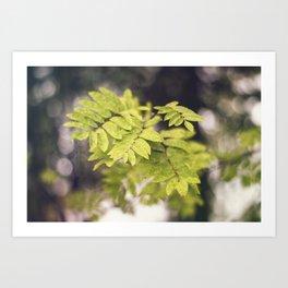 Late Summer Leaves Art Print