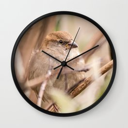 sparrow bird in the tress Wall Clock