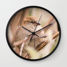 sparrow bird in the tress Wall Clock