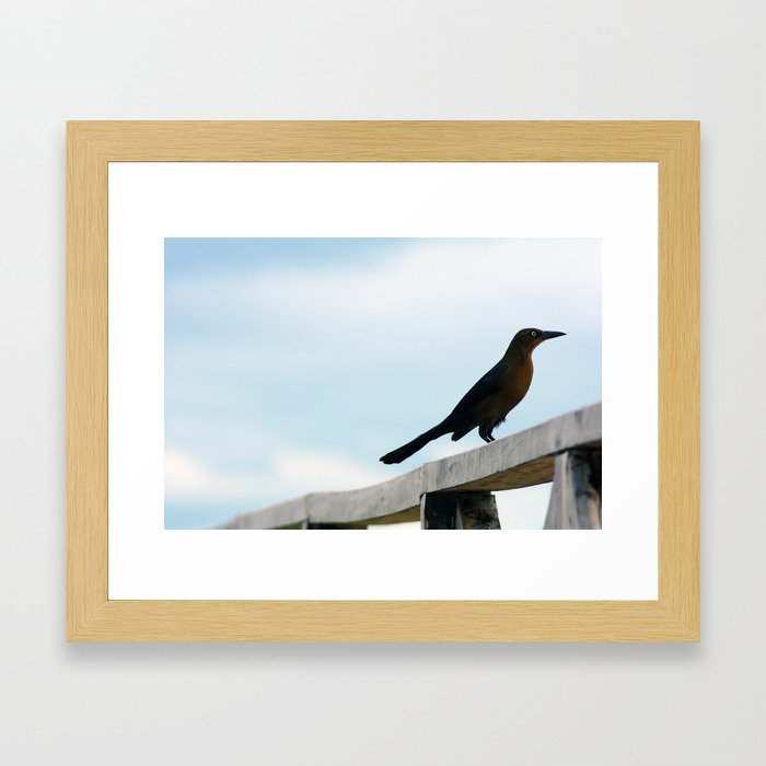 Bird collection _ 01 Framed Art Print