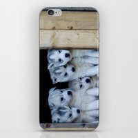 puppies iPhone & iPod Skins featuring Husky puppies by Nathalie Photos