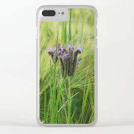 phacelia in a barley field Clear iPhone Case