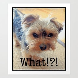 Yorkie | Dogs | Terrier | Pets | Humor | What!?! (with text) Art Print