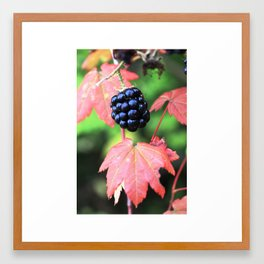 Fall Berries Framed Art Print