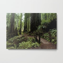 Redwood Roaming - California Wanderlust Metal Print