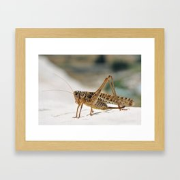 close detail of a grasshopper insect macro image with natural background Framed Art Print
