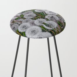 SEEDS OF DANDELION Counter Stool