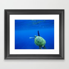 Turtle of the Sea Framed Art Print