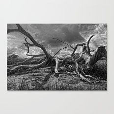 Deadwood Canvas Print