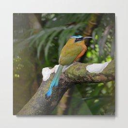 Motmot bird Metal Print