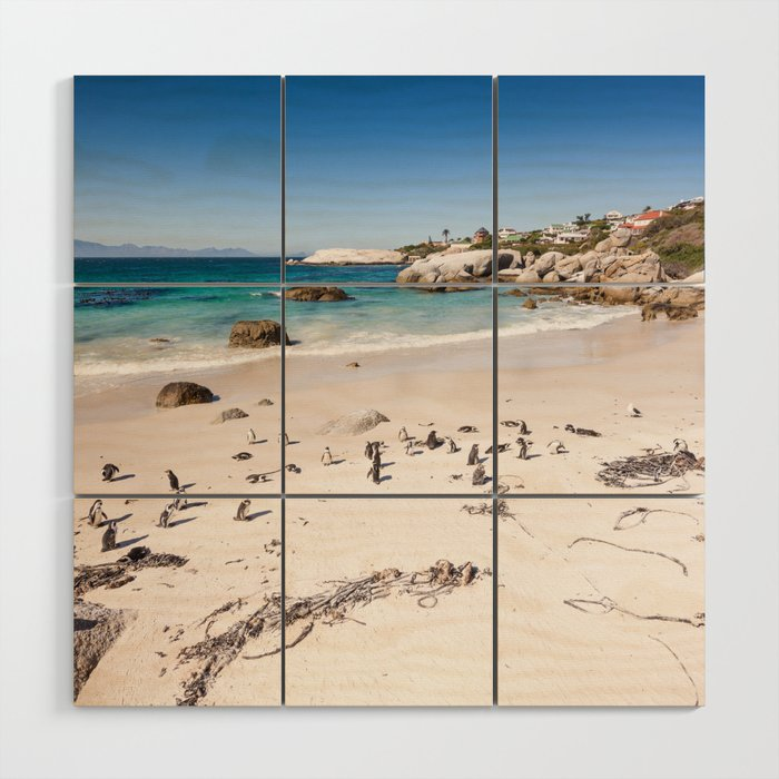Penguins on Boulders Beach in Cape Town, South Africa Wood Wall Art