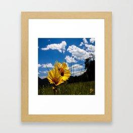 A Rocky Mountain Sunflower Framed Art Print