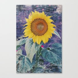 Tournesol Carte Postale - Sunflower Postcard Canvas Print