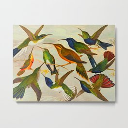 Translate Album de aves amazonicas - Emil August Göldi - 1900 Colorful Hummingbirds Metal Print