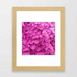 Artful Pink Hydrangeas Floral Design Framed Art Print