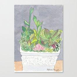 Succulent Garden 1 Canvas Print