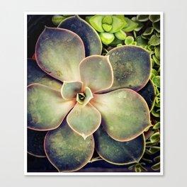 Succulent 1 Canvas Print