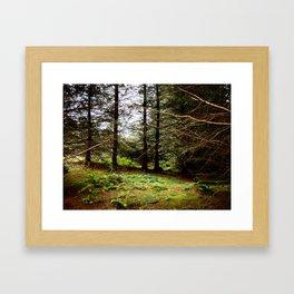 Woodland Copse Framed Art Print