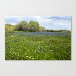 Field of Camas and Dandelions, No. 1 Canvas Print