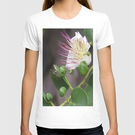 Capers Flower And Fruits T-shirt