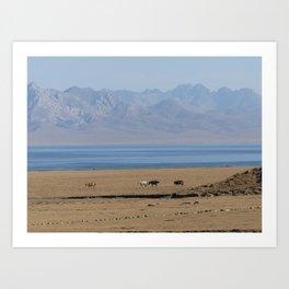 Wild horses at lake Song Kul, Kyrgyzstan Art Print