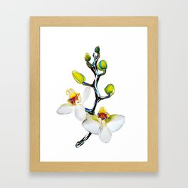 Two orchids and five buds Framed Art Print