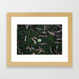 The Lone Flower Framed Art Print