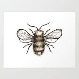 Bumble Bee - Katrina Niswander Art Print